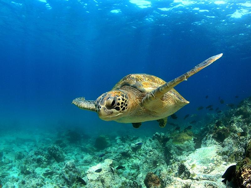 Ecuador y Galápagos. Llegar hasta la Isla de Santa Cruz