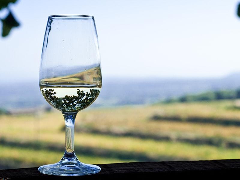 Italia. Cata de vinos