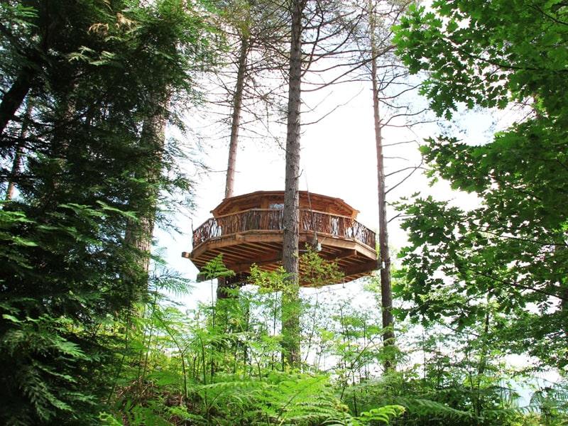 España. Alójate en lo alto de un árbol encantado.